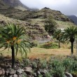 Palm Trees in Mountains, GrCanariSpain — Stock Photo #6389834