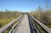 エバーグレーズの自然観察道 — ストック写真