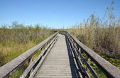Observation Trail in the Everglades — Stock Photo