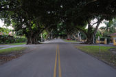 Tree lined street in Coconut Grove, Florida — Stock Photo