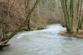 River in wintery forest — Stock Photo
