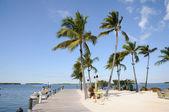 Brygga och palm träd på florida keys — Stockfoto