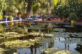 Lily pond at the Jardin Majorelle in Marrakech, Morocco — Stock Photo
