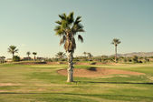 Golf course in Marrakech, Morocco — Stock Photo