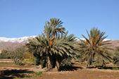 Krajobraz w maroko — Zdjęcie stockowe