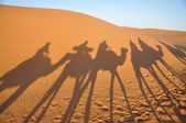 Shadows of camels in Sahara desert — Stock Photo