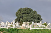 Old graveyard in Morocco, Africa — Stock Photo