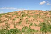 Skóry zwierząt, suszenie na wzgórzu, fès, maroko — Zdjęcie stockowe