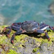 Closeup of a crab on rock — Stock Photo