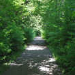Walk way through green trees in the city park — Stock Photo #6392354