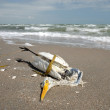 Dead seagull on the beach — Stock Photo