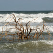 Stock Photo: Tree in water, Padre Island beach