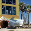 Stock Photo: Shark in front of shop