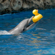 Dolphin playing with rubber duck - Zdjęcie stockowe