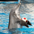 Dolphin playing with a ball — Stock Photo