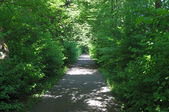 Walk way through green trees in the city park — Stock Photo