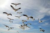Seagulls — Foto Stock