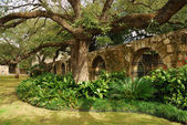 In the garden of Alamo, San Antonio, Texas — Stock Photo