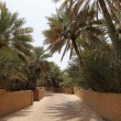 Date Palm Trees in the Oasis of Al Ain - Foto Stock