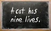 """A cat has nine lives"" written on a blackboard — Stock Photo"