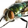 Iridescent house fly in close up — Stock Photo #6238181