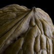 Walnut in low key — Stock Photo