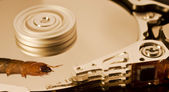 Worm on hard disk — Stock Photo
