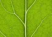 Foglia verde con struttura in da vicino — Foto Stock
