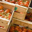 Fresh Tomatoes - Foto de Stock