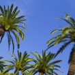 Tropical Paradise Palm Trees — Stock Photo