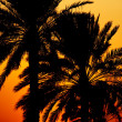 Sunset Behind Palm Trees — Stock Photo