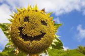Smiling Sunflower — Stock Photo