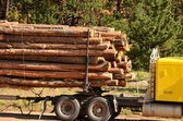 Hauling logs — Stock Photo