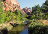 Brook at Zion National Park — Stock Photo