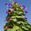 Stock Photo: Flowers climb up