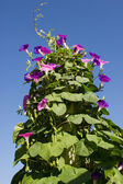 Flowers climb up — Stock Photo