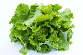 Crispy lettuce — Stock Photo