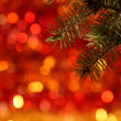 Branch of Christmas tree - Foto Stock