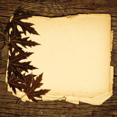 Feuilles d'érable sur papier — Photo