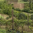Hills of Monferrato - Stock Photo