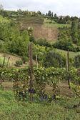 Hills of Monferrato — Stock Photo