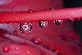 Drops on flower — Foto Stock