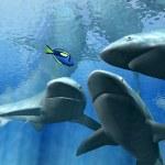 Sharks — Stock Photo #6267310
