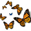 Butterfly — Stock Photo #6269242