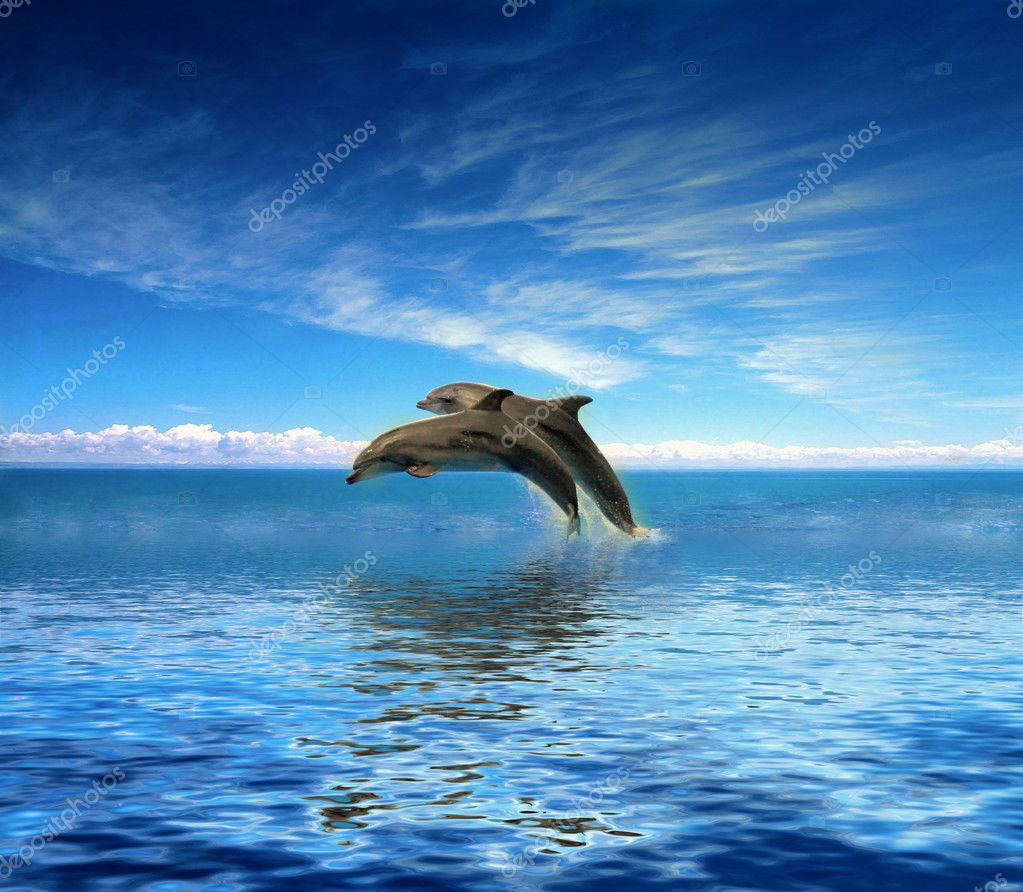 Dolphins — Stock Photo #6272728