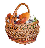 Basket full of mushrooms on a white background — Stock Photo