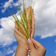 Woman holding crops against blue sky — Stock Photo #6408490