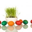 Easter symbols - fresh green grass and colorful eggs — Stock Photo