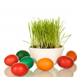 Easter and spring symbols - grass and dyed eggs — Stock Photo