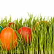 Easter symbols — Stock Photo #6408816